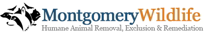 Montgomery Wildlife Removal - (267) 647-6674