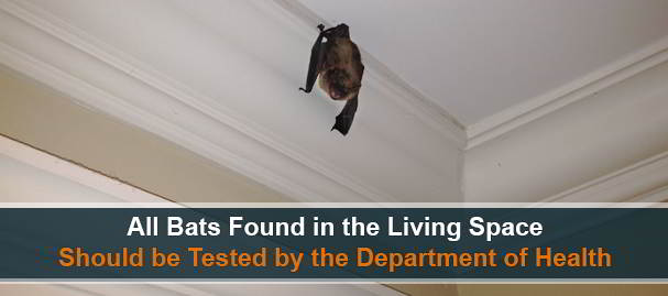 Bat Removal - Rabies Testing in Chester County, PA