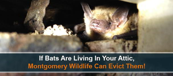 Bat Removal and Exclusion Services Near Charlestown, Pennsylvania