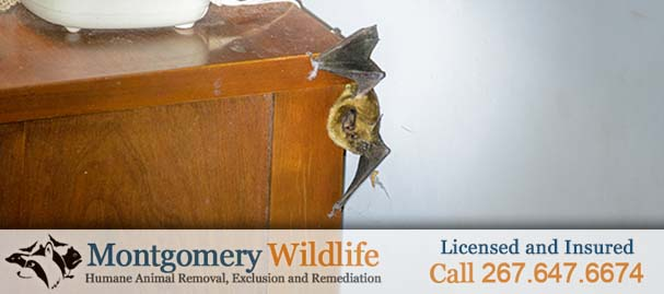 Emergency Bat Removal Near Silverdale, PA