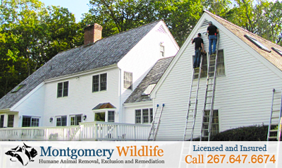 Montgomery Wildlife - Servicing the Bucks County area of Pennsylvania