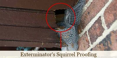 Exterminator's Ineffective at Squirrel Proofing