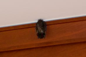 Bat in the Kitchen