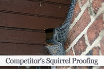 Competitor's Squirrel Proofing